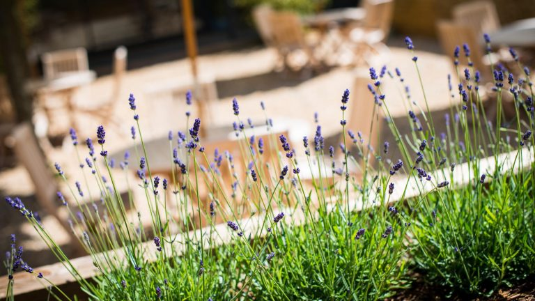 Lavender borders in the beautiful courtyard garden of this Cotswold wedding venue